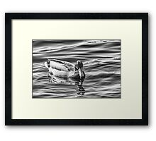 Unquiet water Framed Print