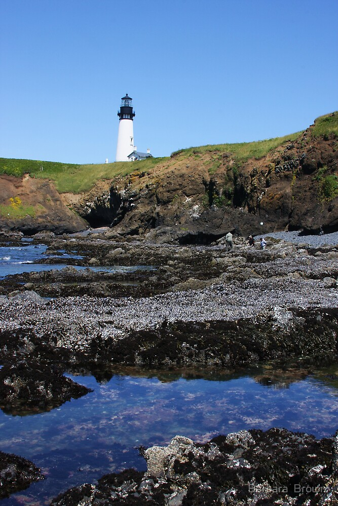 Tide Pools and Lighthouse by Barbara  Brown