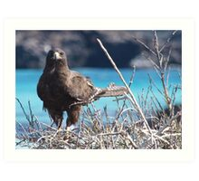 Brown Hawk Art Print