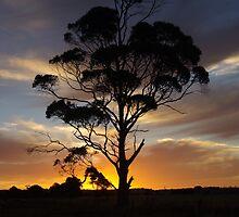 Sunset In Smithton by Lee Popowski