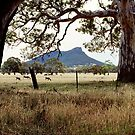 grampians by Andrew Cowell