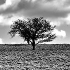 TREE IN THE HIGH PEAKS, by Athanassi