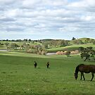 Adelaide Hills by LeeoPhotography