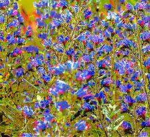 Blue Violet World Of Flowers by Yevgeni Kacnelson