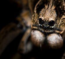Boo...  by Larrikin  Photography