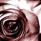 Rose by Veronica Maur'er