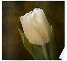 Tulip Reminiscence Poster