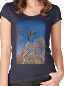 Old dead trunk decayed tree Women's Fitted Scoop T-Shirt