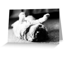 Soft and Fluffy Greeting Card