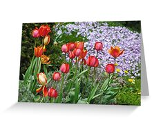 Spring Flowers of Many Colours Greeting Card