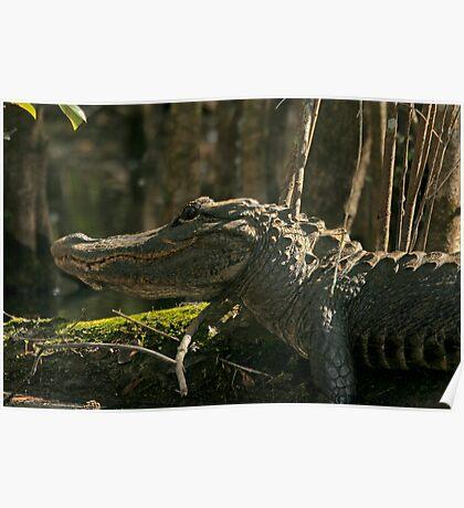 Gator face Poster