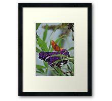Purple Plains Framed Print