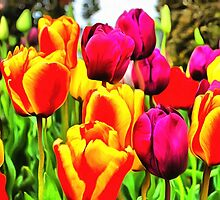 Colorful tulips by RegansWorld