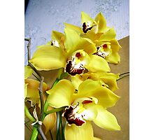 Cymbidium Photographic Print