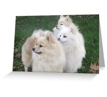 The three daughters of the Breed Record Holder Greeting Card