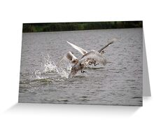 Cygnets first flight Greeting Card