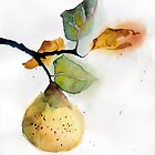 Watercolor illustration of pear by OlgaBerlet