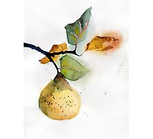 Watercolor illustration of pear Photographic Print
