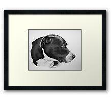 """Compassionate Gaze"" - Pit Bull mix Portrait Framed Print"