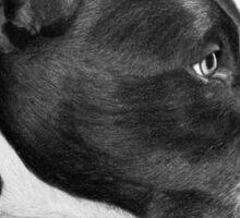 """""""Compassionate Gaze"""" - Pit Bull mix Portrait Sticker"""