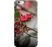 Butterfly Landing  iPhone Case/Skin
