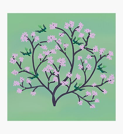 Cherry Blossoms and Birds Photographic Print