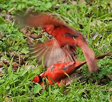 Fighting Cardinals  by Tex Smock