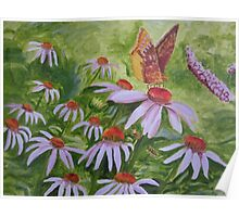 Cone Flower Visitor Poster