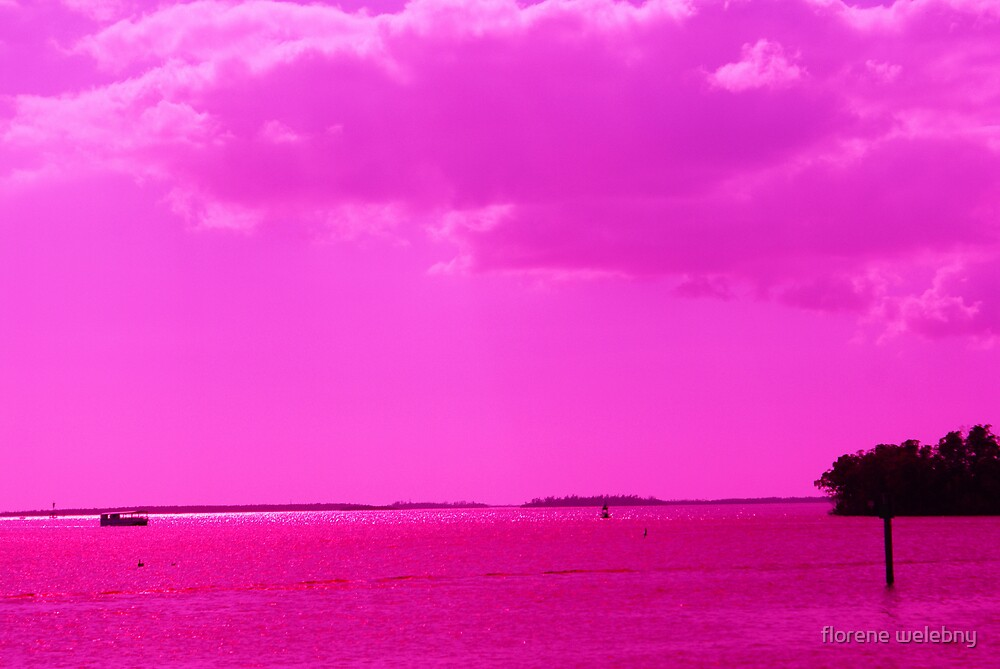 Hot Pink Day by florene welebny