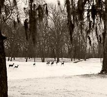 Deer In The Snow  by Tex Smock