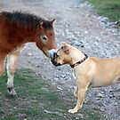 Would you care to dance...?  This is a dog and pony show. by Chris Snyder