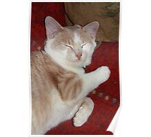 Sleepy Kitten '09 Poster