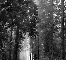 Foggy Road 1 by DJ Fortune