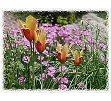 Spring Miniatures Photographic Print