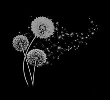 Dandelion Wishes on Black by DolphinPod