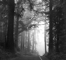 Foggy Road 2 by DJ Fortune