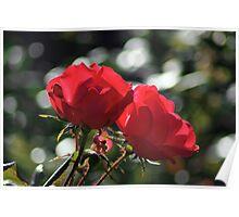 roses in bokeh sea Poster
