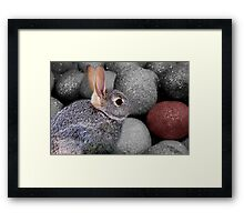 BUNNY AND EASER EGGS..THE ONE THAT CAUGHT MY EYE Framed Print