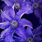 Deep Purple by Kenneth Hoffman