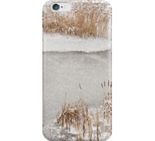Typha reeds winter season iPhone Case/Skin
