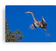 Great Blue Heron 10 Canvas Print