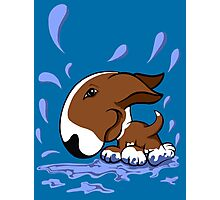 Bull Terrier Splash  Photographic Print