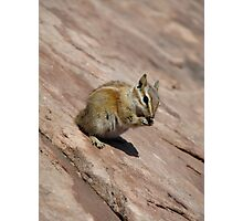 Chipmunk Photographic Print