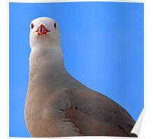 Guard bird..... Poster