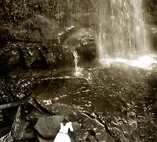 At Erskine Falls, Lorne by Roz McQuillan