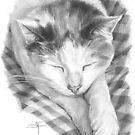 Cat Nap by Sami Thorpe