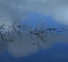 Reflections ... of a confusing branch by myraj