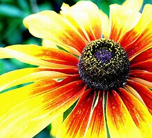 Flower 1 by Alex Boros