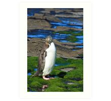 Yellow-eyed Penguin Portrait Art Print