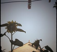 Suburban sunflowers by purelydecorative